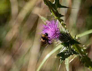Hilfe bei Pollenallergie